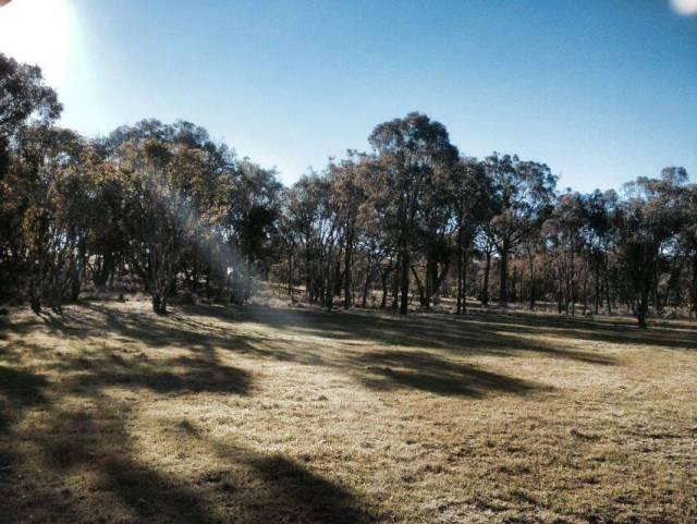 The beautiful grassy woodlands of Mulligans flat