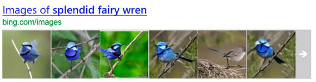 A tasting plate from Bing or Google showcasing the Splendid Fairy Wren