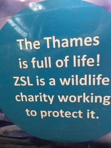 And, by all accounts, the River Thames is an ever-improving aquatic and marine habitat