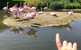 Slimbridge is the only place in the world you can see all 7 Flamingo species