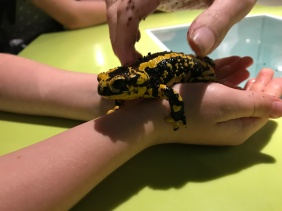 The Amphibian conservation story is engaging and contemporary